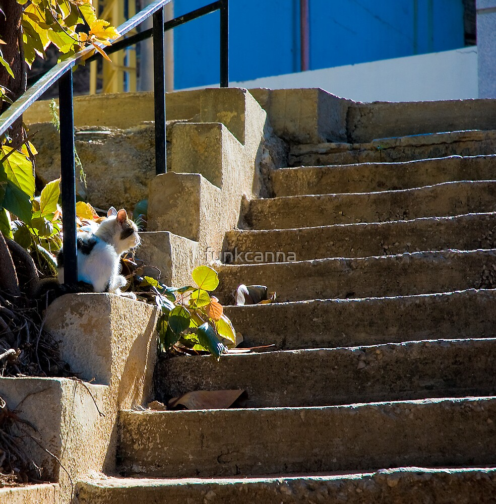 Beirut Cat by funkcanna