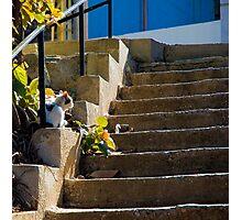 Beirut Cat Photographic Print