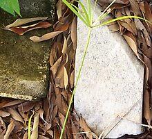Rock On Leaves by karen66