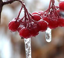 Ice storm by Rodica Nelson
