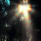 Solar Coronae by Ern Mainka