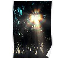 Solar Coronae Poster