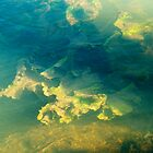 Freshwater river weeds in sunlight under the rippled aqua marine coloured water surface by johnny2sheds
