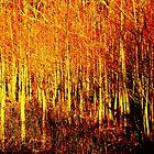 flaming trees by maxx