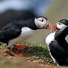 Puffin Courtship by Lucy Hollis