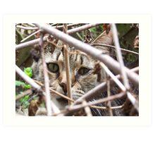 Cat in the brush Art Print