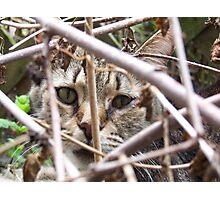 Cat in the brush Photographic Print