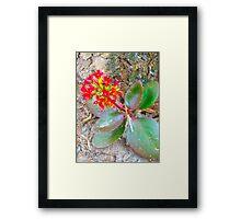 Florida Plant Framed Print