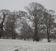 TODAYS  SNOW by TIMKIELY