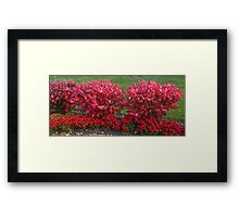 And the colour for today is ... Framed Print