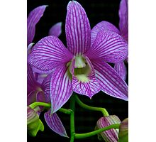 Extraordinary Orchid Photographic Print