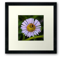Pollinator Hard at Work Framed Print