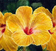 Hawaiian Hibiscus By Yuriy B. by bihusyak