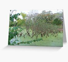 creepy swamp Greeting Card