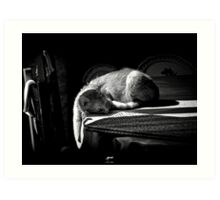 Chat de Normandie Art Print