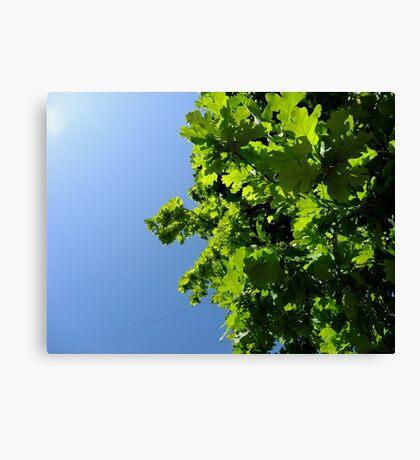Lush Leafy Green Canvas Print