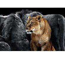 In The Lion's Den Photographic Print