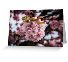 Sakura, Sakura Greeting Card