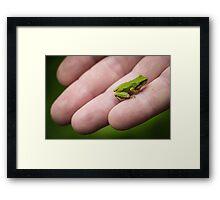 Little Green Frog Framed Print