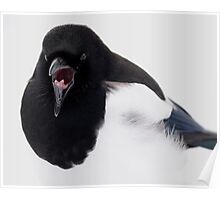 Magpie Yawns at Mammoth Poster