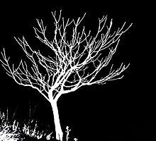 Solitary Tree - White on Black by Ryan Houston