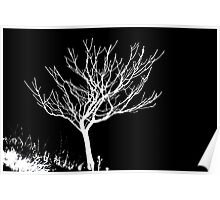 Solitary Tree - White on Black Poster