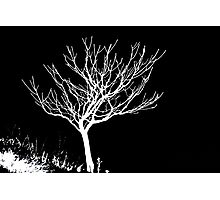 Solitary Tree - White on Black Photographic Print