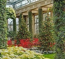Red in the Longwood Christmas Conservatory  by Marilyn Cornwell