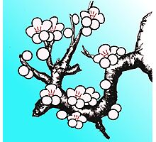 White Sakura Cherry Blossom Vector Design Photographic Print