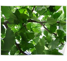 """'Ginkgo"""" Poster"""