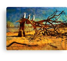 Parched Earth Canvas Print