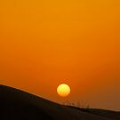 Sunset over dunes of the Dubai Desert Conservation Reserve, UAE by Shannon Plummer