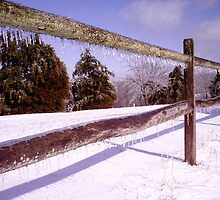 Don't fence me in by Melissa Emerick