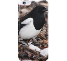 Magpie's Winter Forage iPhone Case/Skin