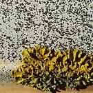 Lichen by Craig Watson