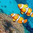 Nemo by Gerard Rotse