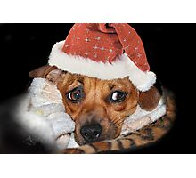 And what do I get for Christmas ? Photographic Print