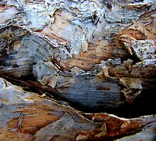 Cave Dweller by Kathie Nichols