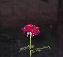 After the rain 1 by Efi Keren