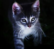 The Cats Whiskers!! by Jacq Wilson