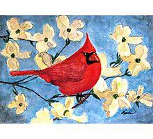 A Cardinal Spring Photographic Print