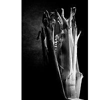 internet corn Photographic Print
