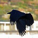 Black Shadow.......... by lynn carter