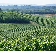 Vineyards at Plessiva by Paris Franz