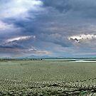 Lake Naivasha : Kenya by Damian Kuczynski