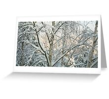 Birches in Snow Greeting Card