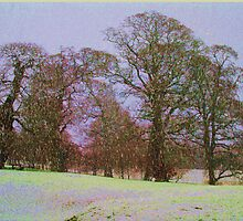 WINTER WONDER LAND by TIMKIELY