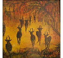 OH DEERS! Photographic Print