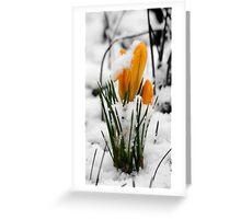 Snowy Morning Greeting Card