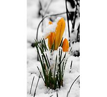 Snowy Morning Photographic Print